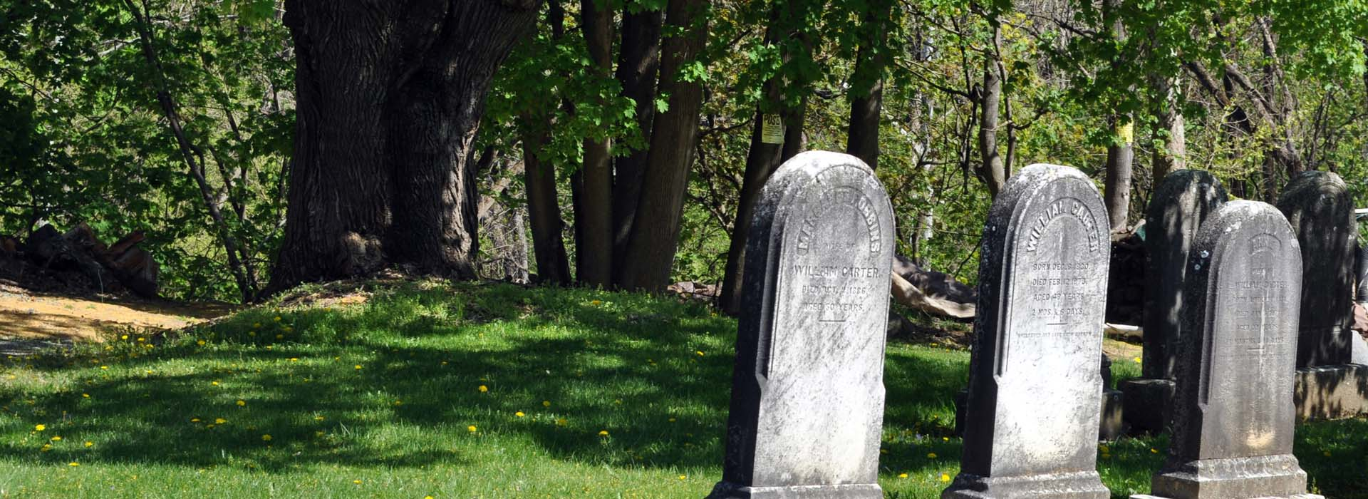 Greenwich Cemetery is not just about the past